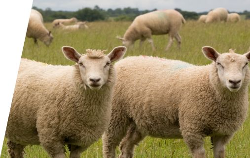 Carrfields - Carrfields Livestock can help with your