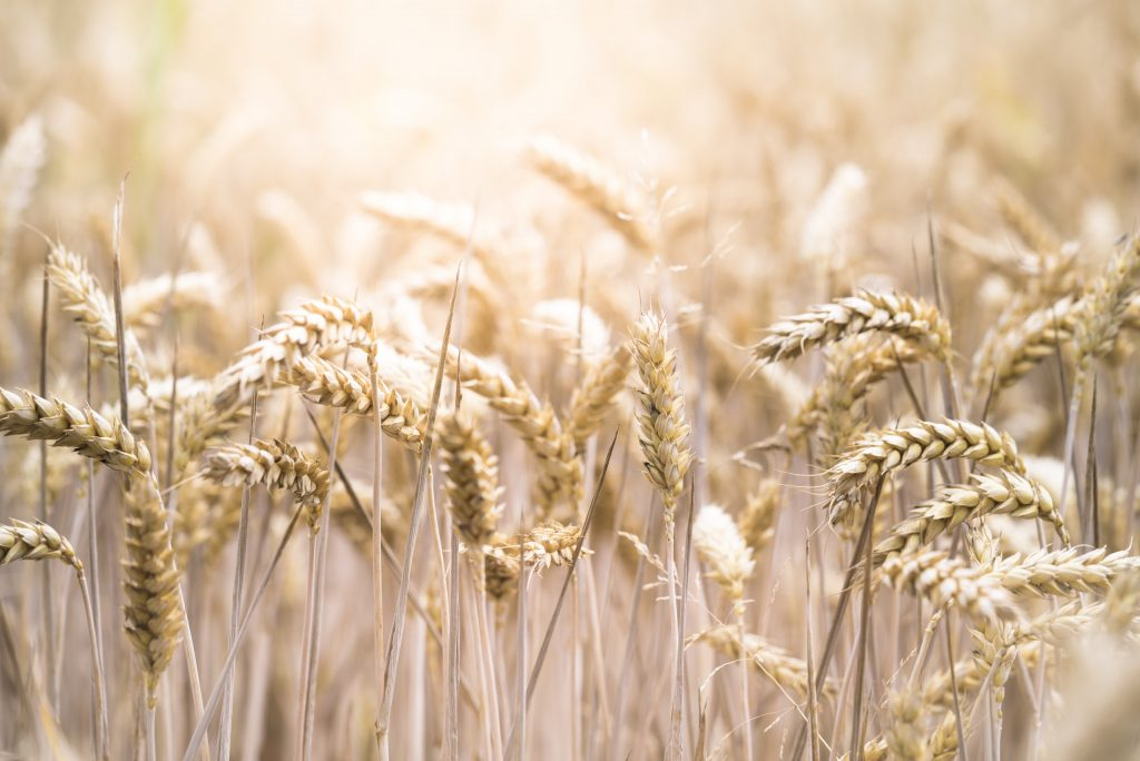 Carrfields Market update from Carrfields Grain & Seed - Carrfields - Your trusted partner
